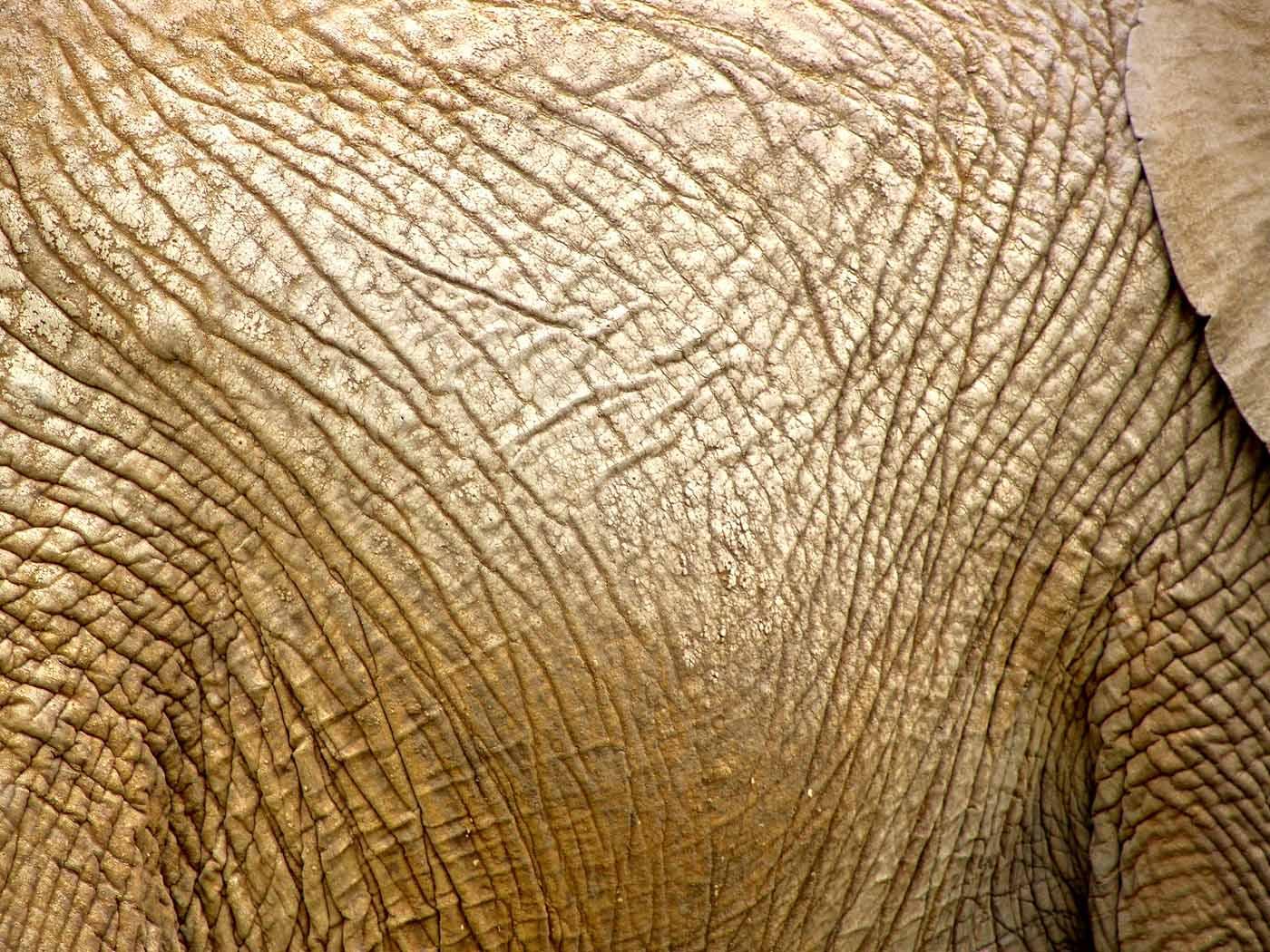 Elephant skin eleonor stuc